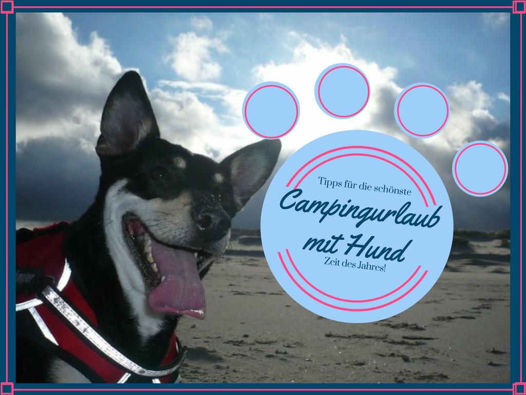 Wunderbar Blog Campingurlaub Mit Hund