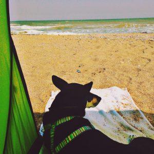 IMG_0003-300x300 Campingurlaub mit Hund - Gemeinsam erleben!